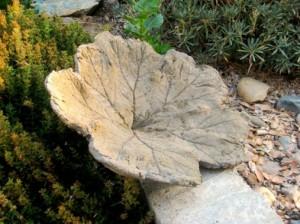 Leaf-casting a rhubarb leaf