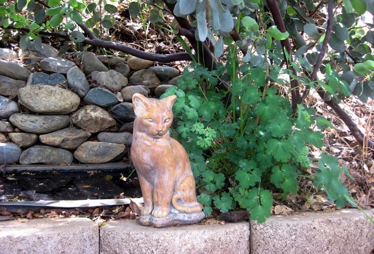Serene stone cat and Columbine