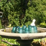 Finches visit my bird bath