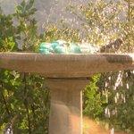birdbath splash