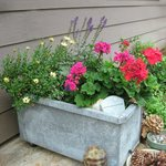 Garden junk. Osteospermum, Salvia 'May Night' and graniums in a galvanized palnter on wheels.