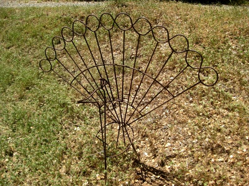 peacock before