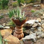 pedestal plant