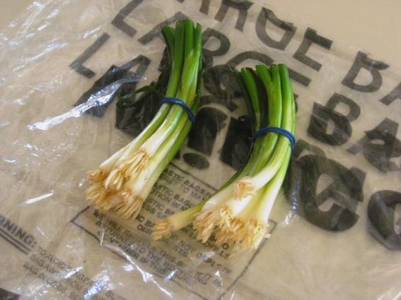 Green onion bottoms