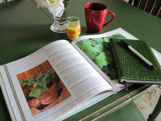 Jeanie's gardening planning in progress.