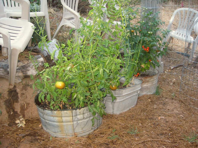 my galvanized wash tub garden flea market gardening