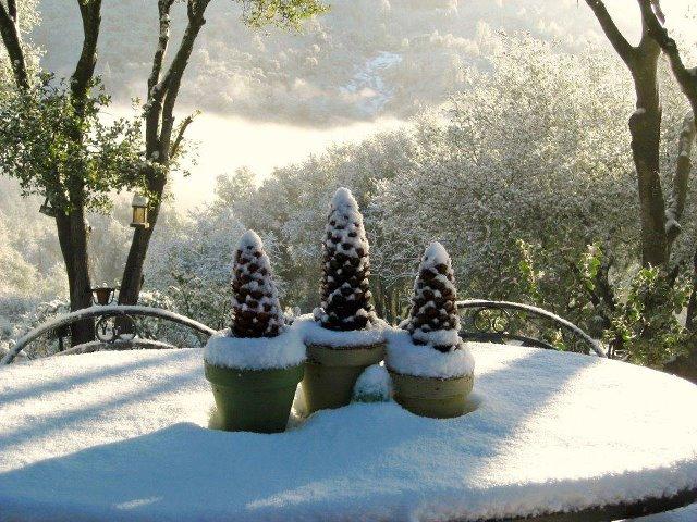 Pine cones stuck in flower pots catch the snow