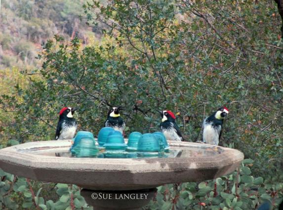 Four wondrous woodpeckers