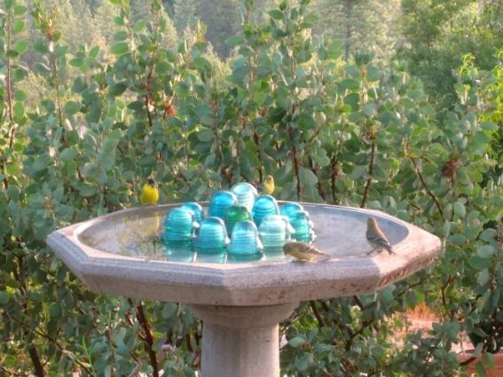 Happy birds, Lesser Goldfinch