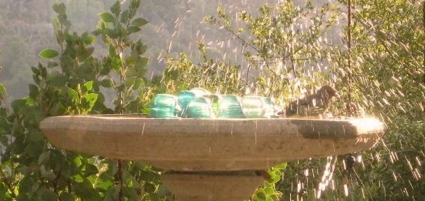 The ordinary and amazing birdbath