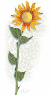 SunflowerTall stephie