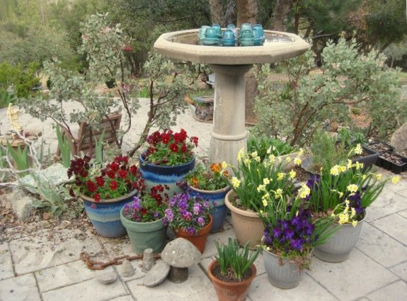 The bird bath in Spring surrounded by pots of violas and mini daffodils