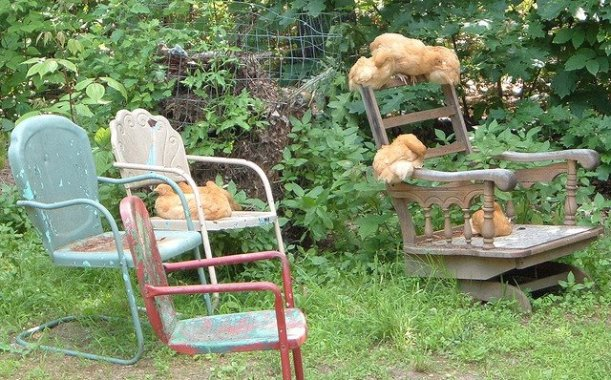 """""""My sweet girlies lounging on grammy chairs in the garden...."""""""