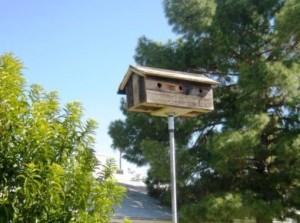 Birdie condo, 15 ft up!