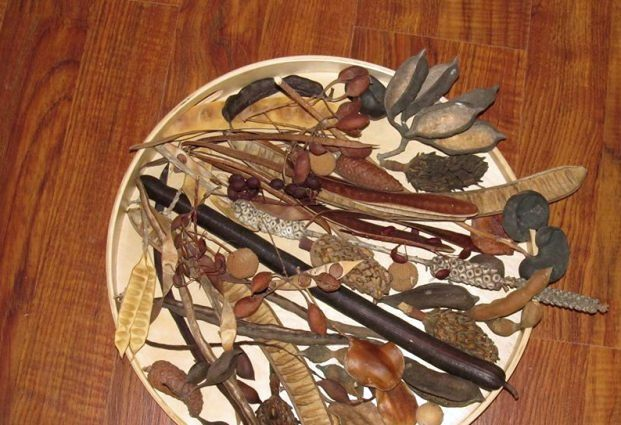 Caroline Artzi I collect seed pods for my work area