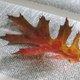 Preserving leaves