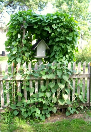 Twig arch covered with morning glories