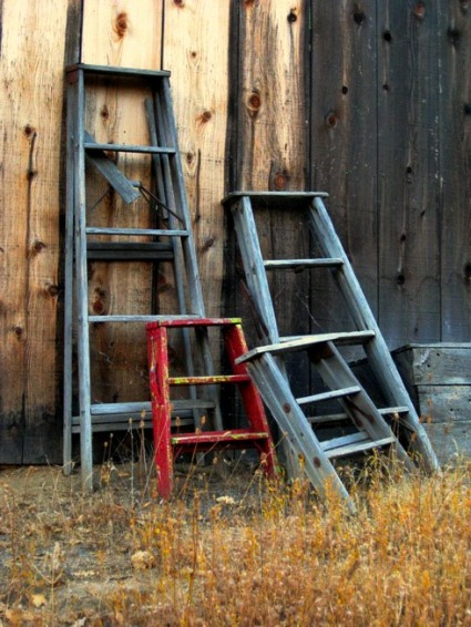 Sue Langley's ladders against the old shed