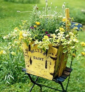 A sunny yellow dairy crate holds like colored flowers