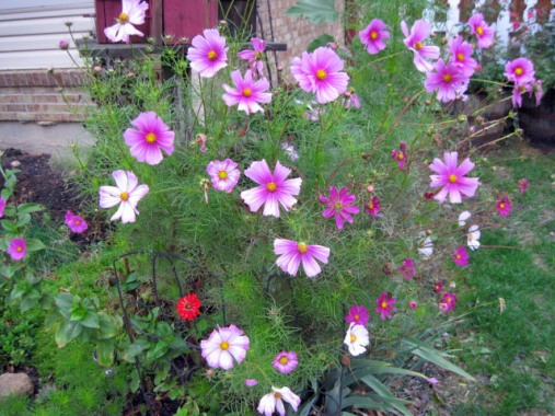 Too 'friendly' cosmos