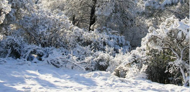 Winter landscape by Sue Langley