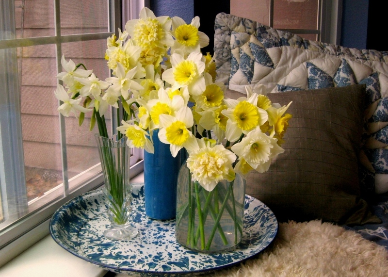 Blue and white Flea Market finds surround my daffodils