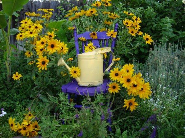 Jane Krauter's purple chair and Black-eyed Susans