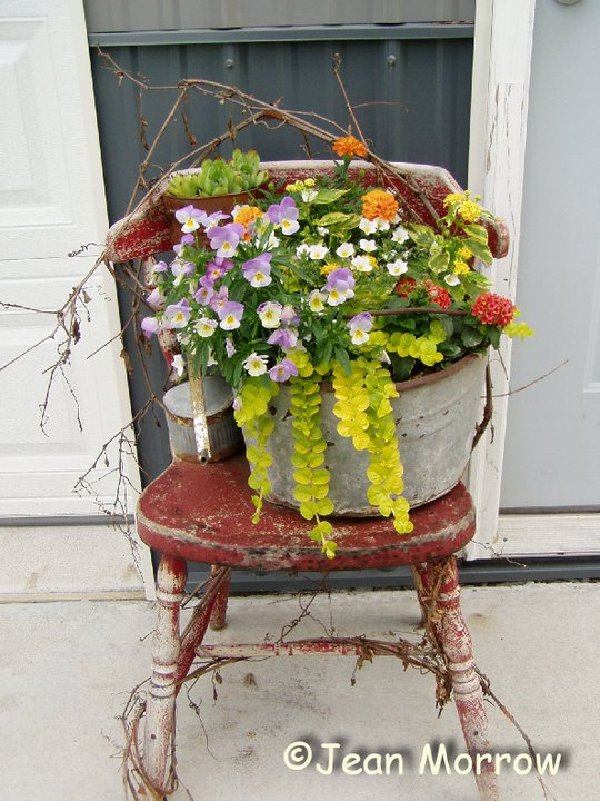 Violas and Creeping Jenny spill out of Jean Morrow's galvanized pail set idly on a shabby red chair