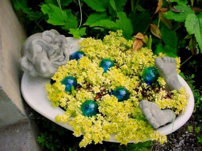 Patty Fitch Hicks' cheery basin of Sedum makinoi 'Ogon'