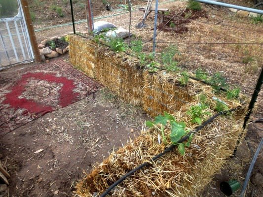 Planted bales