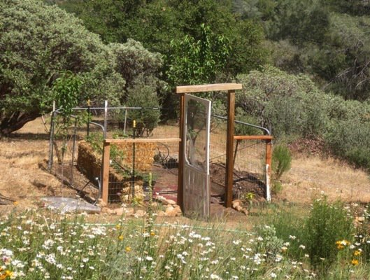 Setting for the Ranch Gate garden next to the meadow.