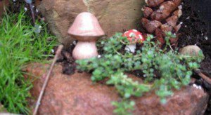 Tiny mushrooms given by a friend.