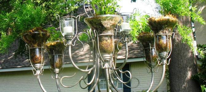 Sonia Kirk's chandelier-