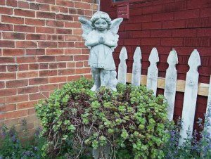 Angel in sedum
