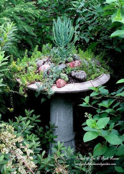 "Barb Rosen ""Our succulent birdbath"""