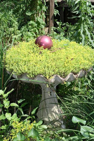 "Bobbi Doll-  ""It's been a great year for my sedum"""