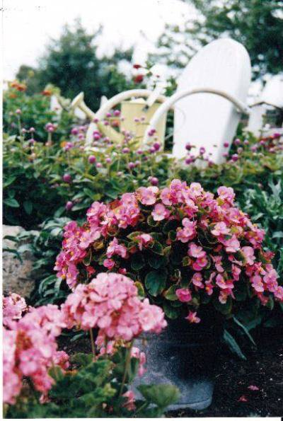 From 'For Dragonflies And Me', a pure white chair prettily accents pink begonias