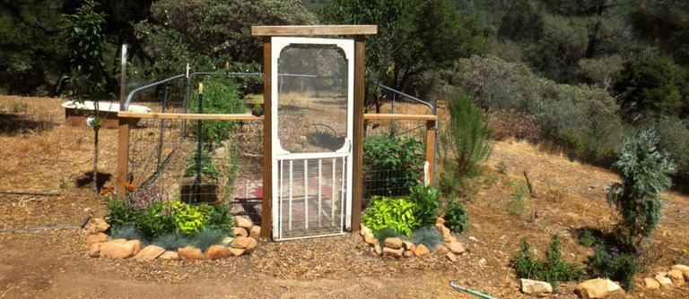 Growing straw bale garden