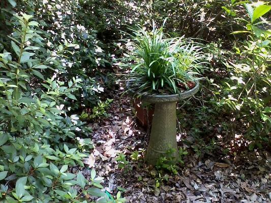 "Janet Hill says, ""Old bird baths make interesting planters"""