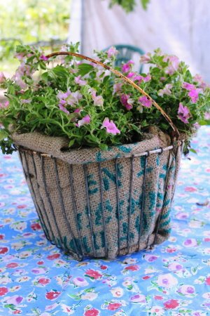 Remove the plant from the pot and carefully place it in the basket