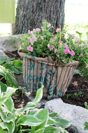 Your adorable planted egg basket!