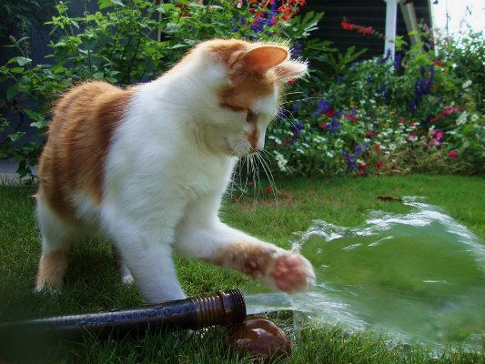 Pawsitively fascinated by water
