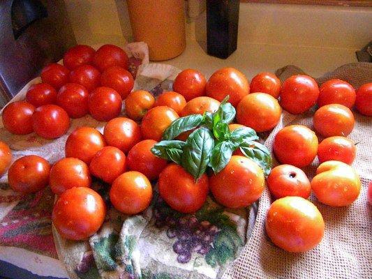 Carol Hall's tomatoes