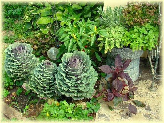 Jeanne Sammons greens garden