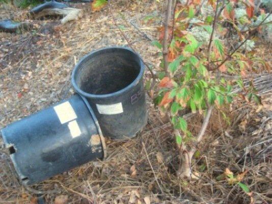 This viburnum was $5.for a 5 gallon can. Who knows why it turned brown, but it was in the nursery a long time and needed to be put in the ground to grow!