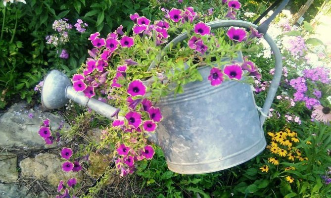 Annie Downs's watering can