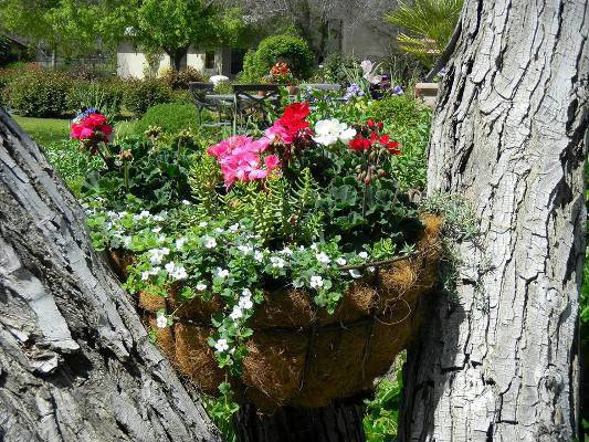 Joy placed a wire basket, filled with moss and geraniums