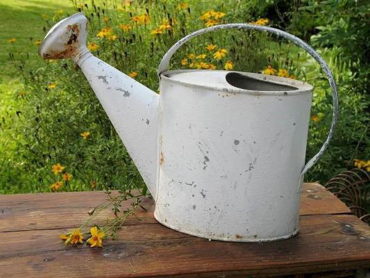 Lisa Daniel's basic watering can