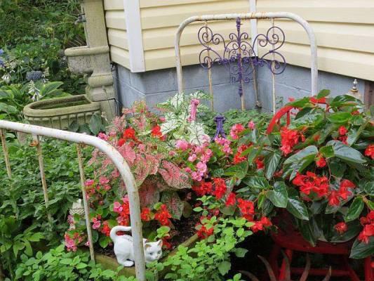Marlene Kindred' quaint garden bed