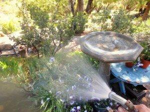 Spray the surrounding shrubbery